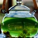 super aliments : le thé vert