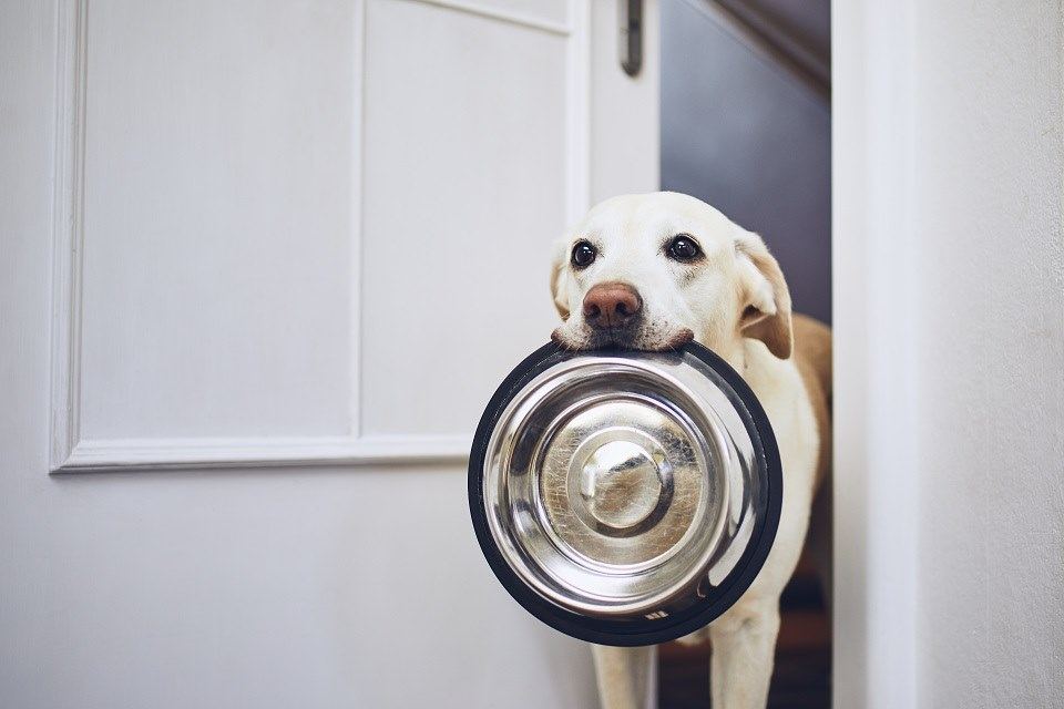 Quand nourrir votre chien